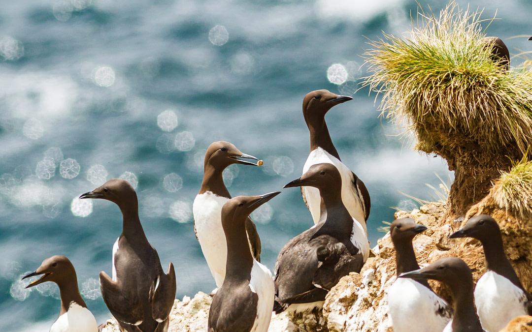 British Columbia Important Bird Areas Intern