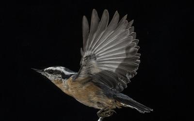 Thunder Cape Bird Observatory – Volunteer Positions