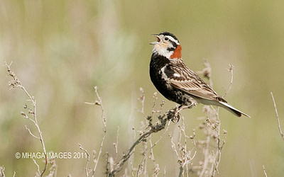 Prairies an ideal setting for an iconic cast of birds