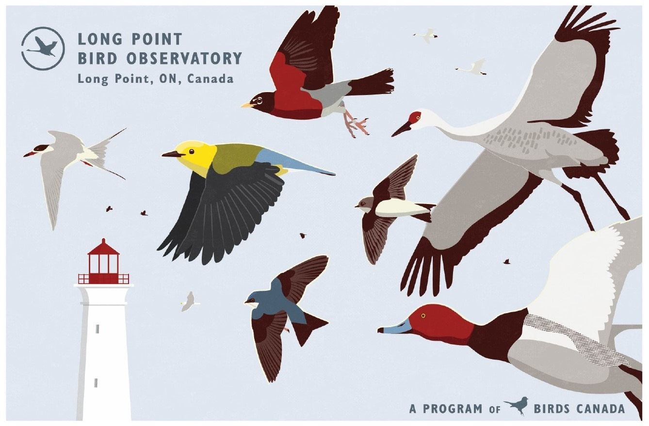A graphic for Long Point Bird Observatory. The image depicts many birds in flight in front of a lighthouse and a clear blue sky. The graphic features birds iconic to the region, including Sandhill Crane, Redhead, Prothonotary Warbler, Bank Swallow, Tree Swallow, and American Robin