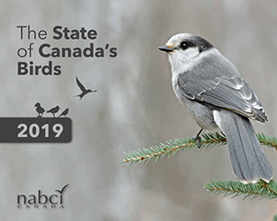 Canada's birds are warning us about the state of our natural world