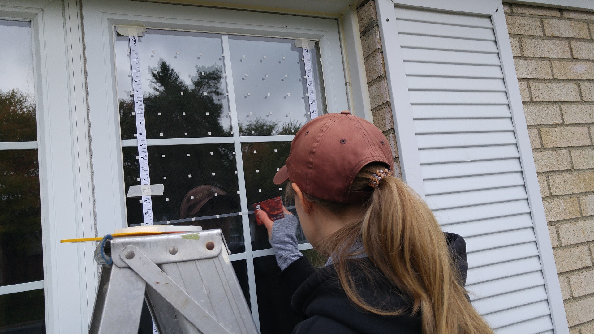 A woman installing window decals for preventing window-bird collisions