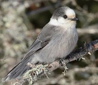24th Annual Great Backyard Bird Count