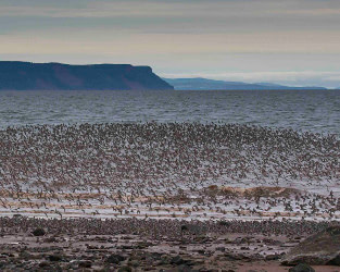 Space to Roost Project Makes a Difference for Shorebirds in NS