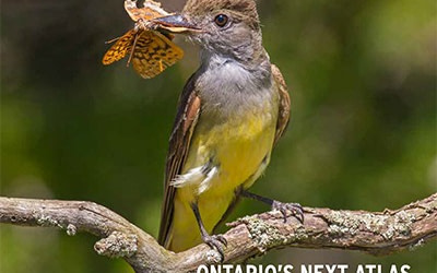 Welcome spring with the latest issue of BirdWatch Canada