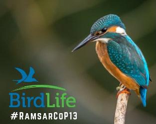 Ramsar Conference Leads to Positive Steps for Coastal Wetlands and Fraser Delta