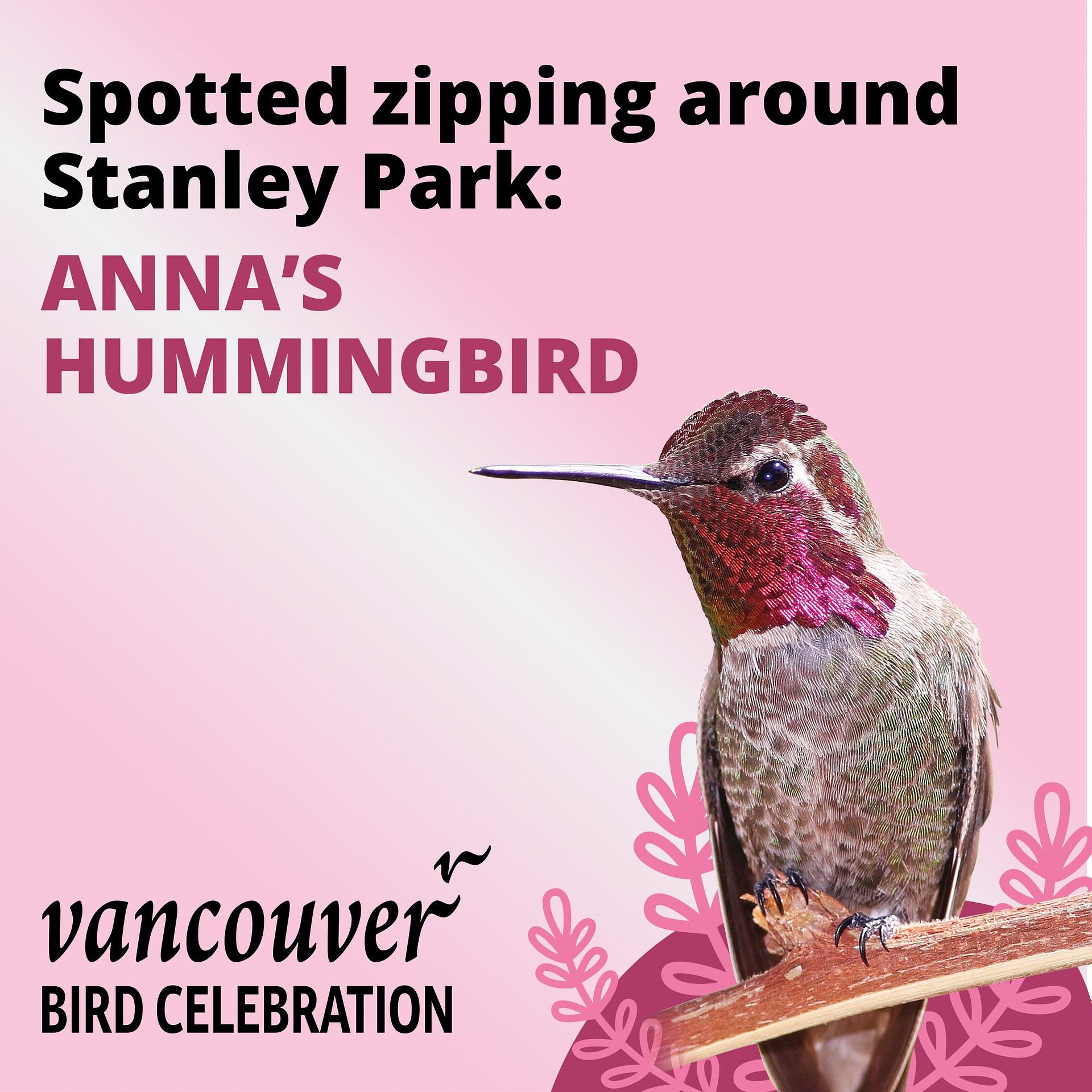 Anna's Hummingbird - Vancouver Bird Celebration