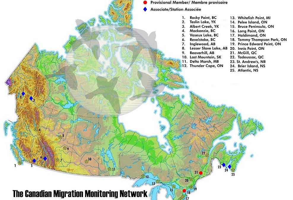 Canadian Migration Monitoring Network (CMMN)