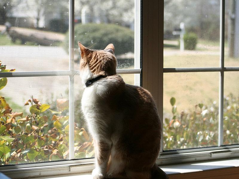 A cat sitting on a window ledge peering through the sunlit window panes