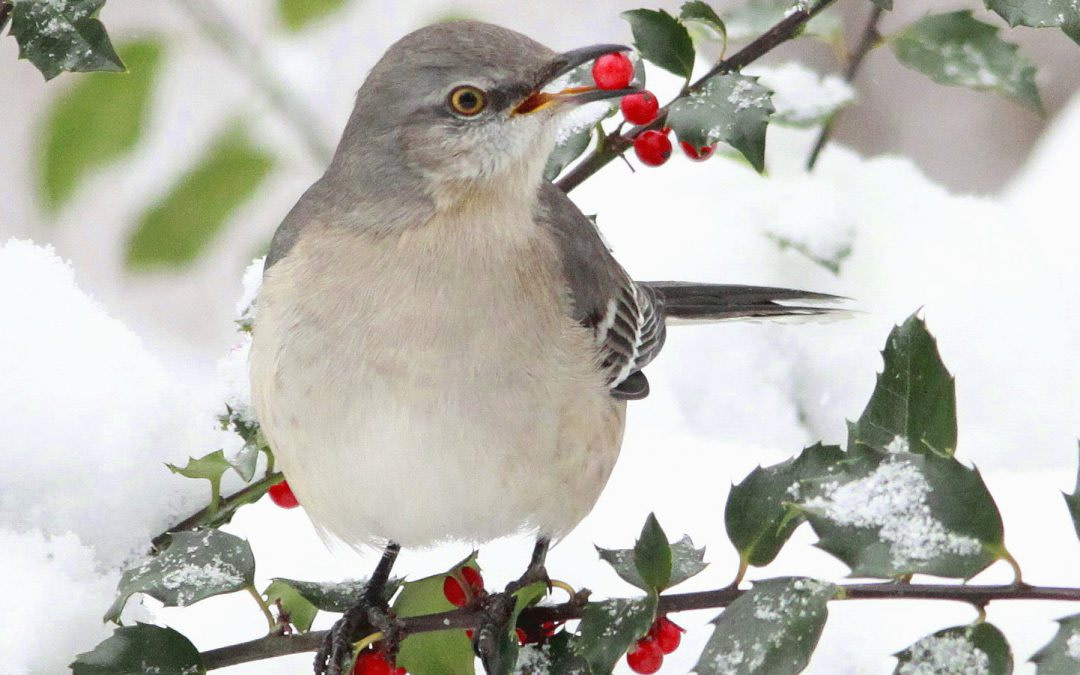 Holiday Gifts that Support Bird Conservation