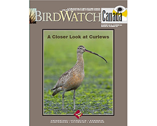 """Refreshing Reads in the Summer Issue of """"BirdWatch Canada"""""""