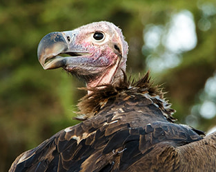 Thank You for Being Champions for Vultures!