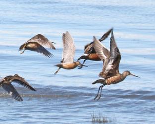 Ambitious International Summit Tackles Threats Along Migratory Flyways