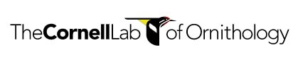 Link to Cornell Lab of Ornithology website.
