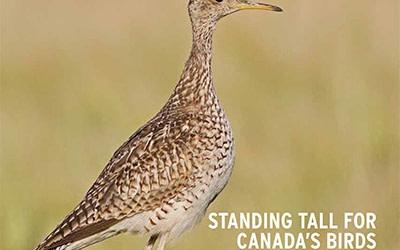L'édition estivale de BirdWatch Canada met l'accent sur vos contributions