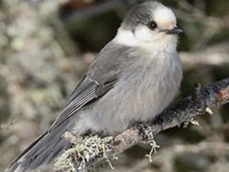 le Grand dénombrement des oiseaux de février