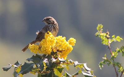 Commencez à jardiner pour les oiseaux aujourd'hui!
