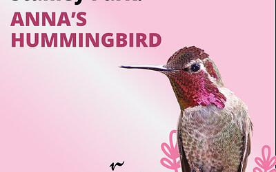 Des explorations virtuelles du fascinant monde des oiseaux