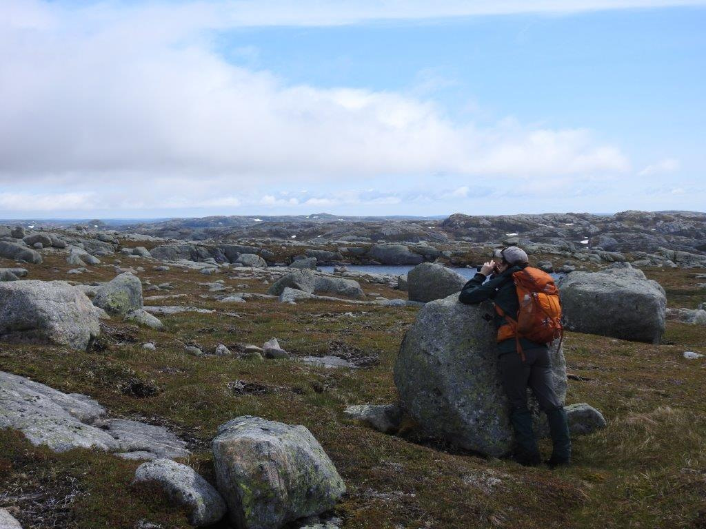A field surveyr leaning on a rock and looking through binoculars in a rugged Newfoundland landscape