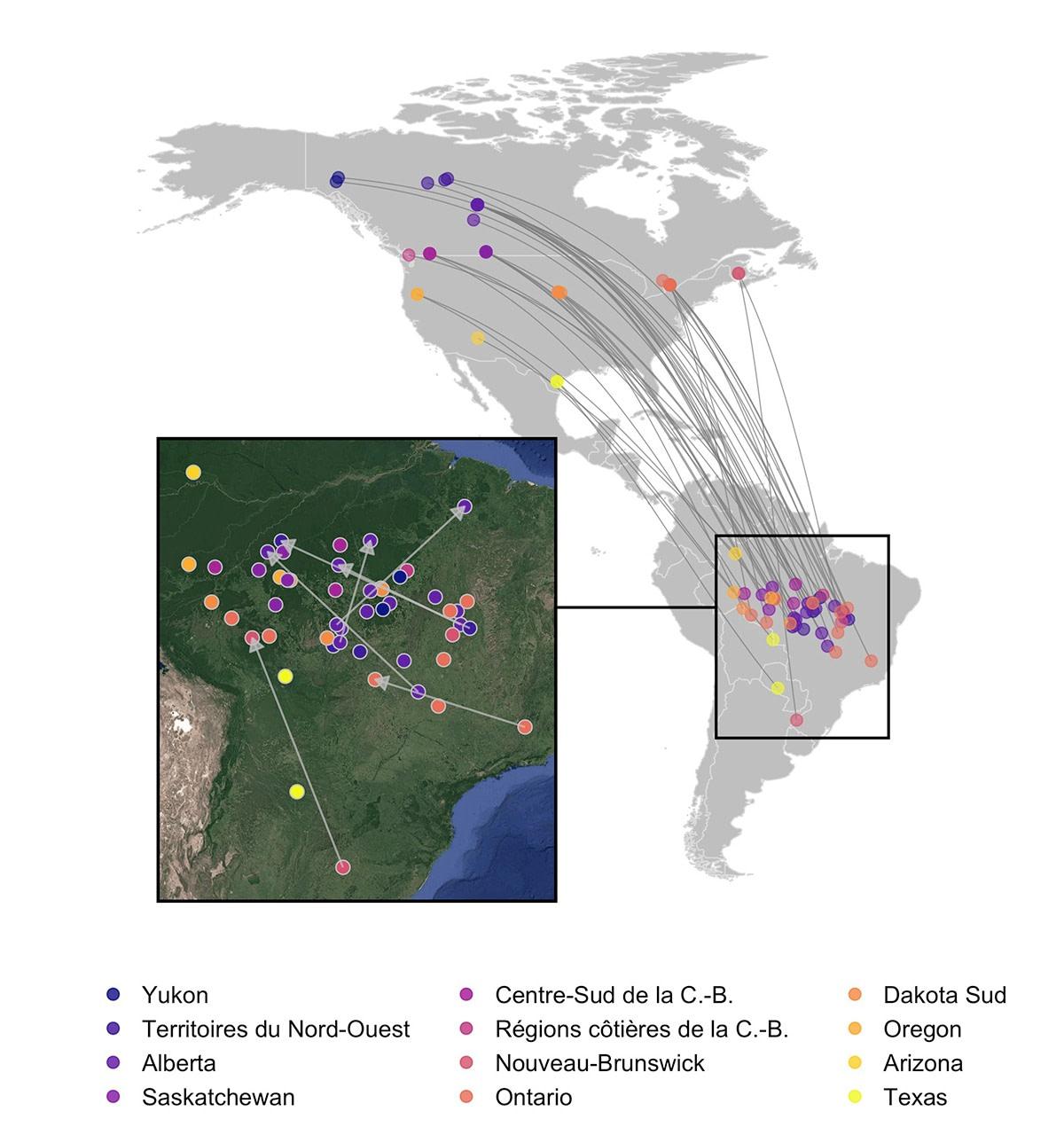 Carte montrant les sites d'hivernage des différents populations, en Amérique du Sud
