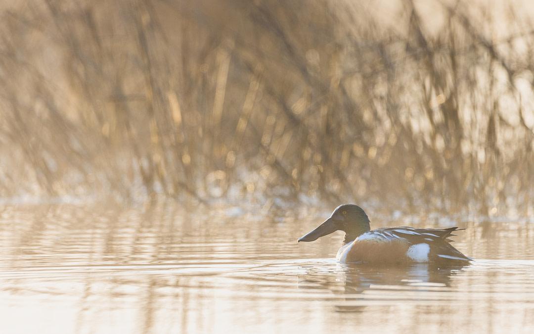 L'adaptation aux changements climatiques doit prendre en compte les oiseaux – vous pouvez aider