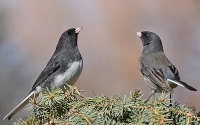 Maintenez l'espoir en vie pour les oiseaux en 2021