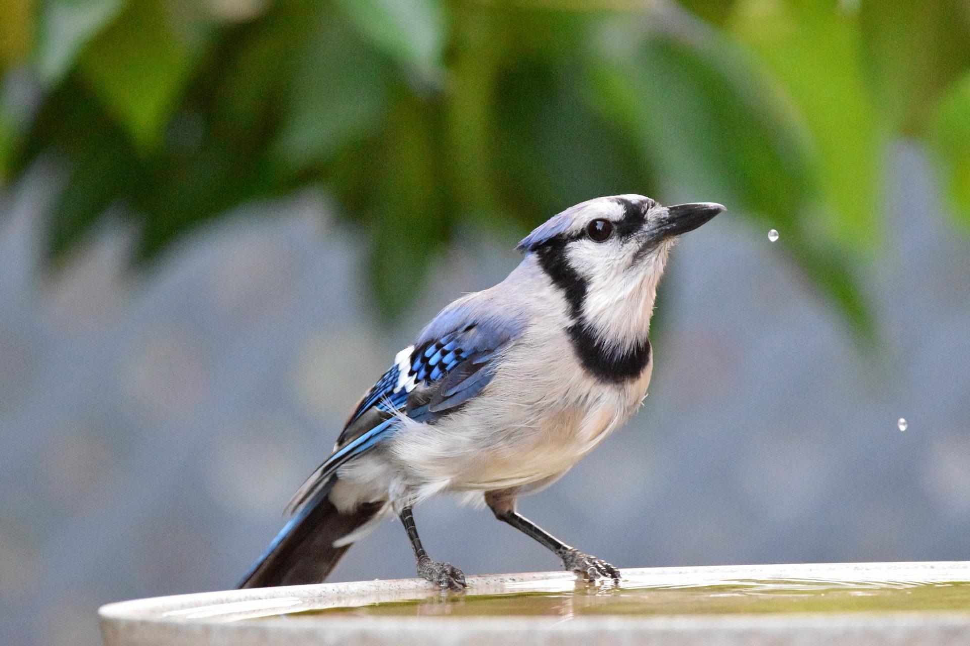 Contribuez à la recherche scientifique en observant les oiseaux par votre fenêtre!