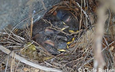 Les merveilles de la vie au nid
