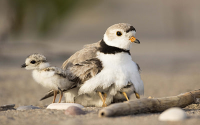 Biologiste, intendance des côtes – Sud-est du Nouveau-Brunswick