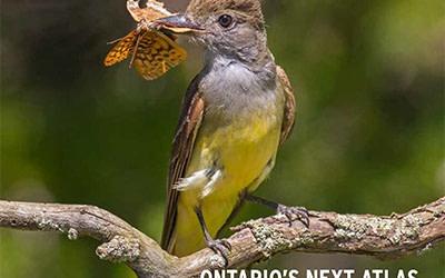 Accueillez le printemps en lisant le plus récent numéro de BirdWatch Canada